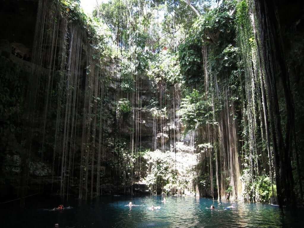 cancun rain forest
